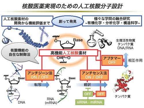 構造分子薬理学分野 |名古屋大...